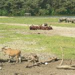safari on foot