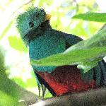 Quetzal!
