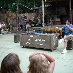 Chris doing the alligator and snake show