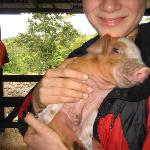 New born piggy! So cute!!