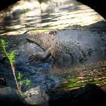Corcovado Park - beware the crocodillos!