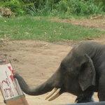 Mae Tang Elephant Park
