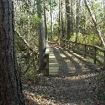 Walking path thru woods, Barrier Island Station, Kitty Hawk