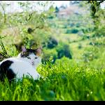 "One of the furry ""residents"" at the Agriturismo, there were several cats who lived there."