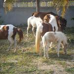 Wild horses by the Pink Papaya