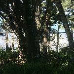 Sounds of the Sea RV Park - the ocean view through all the trees