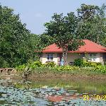 cottages across the lotus pond