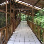 walkway cloud forest lodge