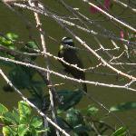 birdwatching in the garden