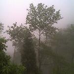 The Misty hills - Darjeeling