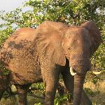 Awsome elephant
