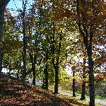 Foto di Moses H. Cone Memorial Park