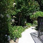Garden pic #1