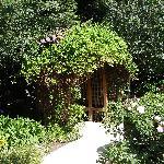 Garden pic #2