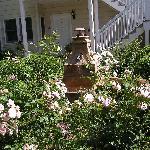 Garden pic #3