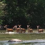Foto de Coosawattee River Resort