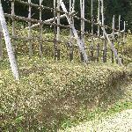 馬防柵の土塁は往時のままと言われています。