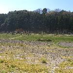 武田方から連吾川そして背後の丘陵部が徳川家康の本陣です。