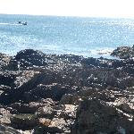 View of Coast from Marginal Way