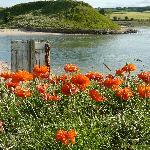Alnmouth Estuary