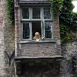 "The famous resident doggie star of film ""In Bruges"""