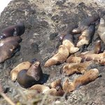 Viewpoint off highway 101 - sea lions
