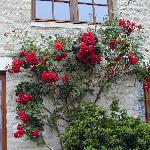 Le Grande Hard, roses