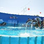 zoomarine dolphin show