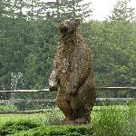 Bear at Bear Creek