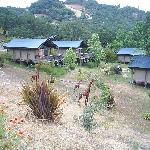 Cabins at Safari West
