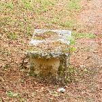 mouldy bench along path