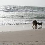plage au nord de nouakchott, fin d'après midid et pêche aux coquillages