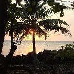 Sunset in Palm Tree - PARADISE!