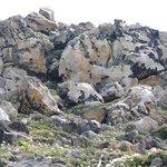 高山植物の咲く岩山