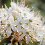 写真2の花のアップ