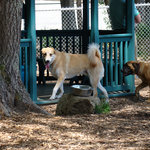 Kennebunk Dog Park