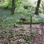 Footpath from Shaftsboro Farm to Lee village