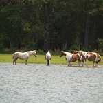 View of Ponies from Daisey's Dockside Tour