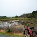On Assateague Trail