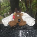 Our traveling mascot, the Wee Patudy, enjoying a hot tub