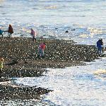 Lost Creek SP - people hunting for agates