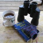Birdwatching, tea and knitting in the morning