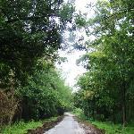 Coorg - Jungle road through Nagarhole NP