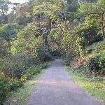 walking path in the estate