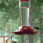 Humming bird on feeder at Mazama Country Inn