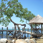 A pier in front of Micky's house in Sandy Bay with a mangrove tree