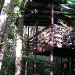 Our rainforest lodge