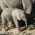 Close encounter of the elephant kind at Addo near Kronenhoff