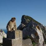 los monos no nos tienen miedo