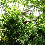 Our villa from hotel walkway - really lush tropical gardens!